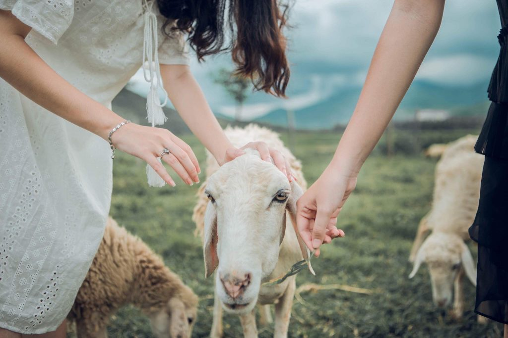 Check in  ngay Đồng Cừu Suối Tiên